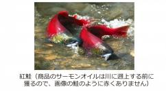 SalmonCaps-img3